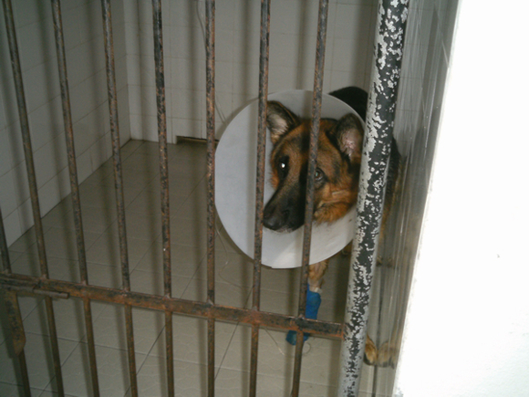 Kennels for animals under treatment